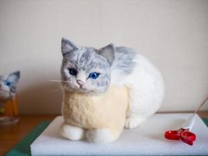 Cat1r